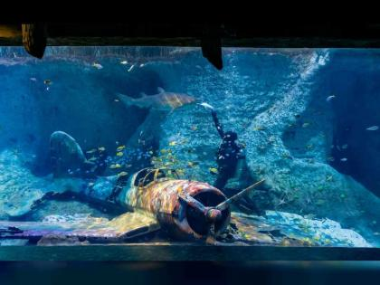 National Aquarium will house regions' largest Shark and Ray collection, showcasing over 200 animals from 25 species