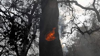 Greek firefighters battle blazes as temperatures soar