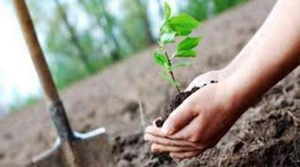 Tree Plantation drive kicked off in PMAS AAUR