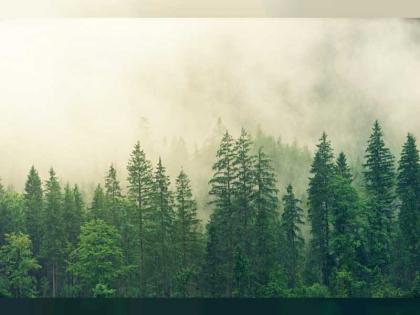 Satellites reveal how forests increase cloud and cool climate: European Space Agency