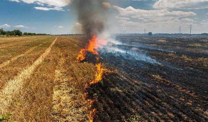 Farmers should avoid setting residues of paddy crops on fire
