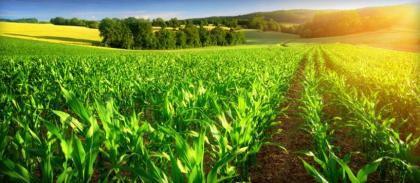 U.S. agricultural futures fall