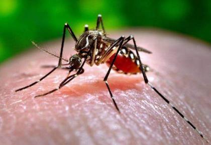 17 dengue patients under treatment in KTH: Spokesman
