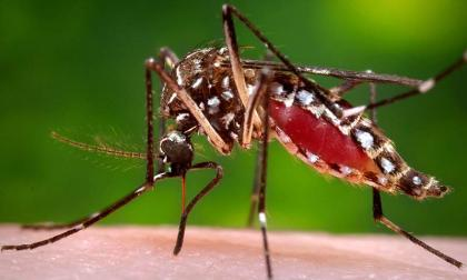 DC for devising effective strategy to deal with the rising dengue cases