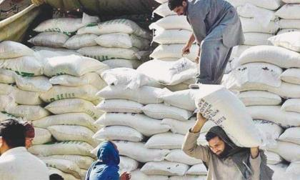 Provinces urged to follow Punjab, ICT in bringing down flour prices