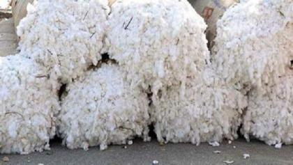 APBUMA calls for permitting cotton, yarn import from Turkey, India, Uzbekistan