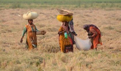 Int'l Rural Women Day to be marked on Oct 15