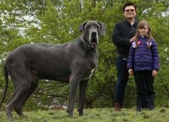 Britain Biggest Dog
