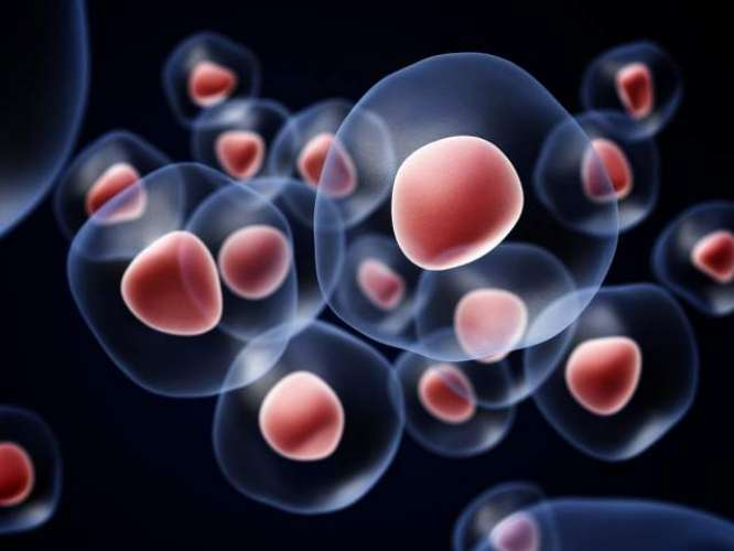 Stem-cell therapy a revolutionary way to cure diseases