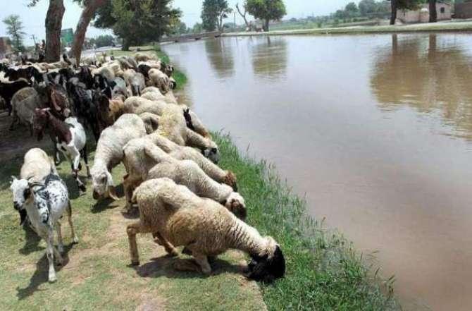 Bher Bakriyon Ki Afzaish main Darakhtoon ki Ehmiyat