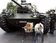 بینکاک، تھائی لوگ اپنے پالتو جانور ٹینکوں کے سامنے بٹھا کر انکی تصاویر ..