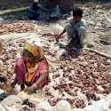 حیدر آباد: خانہ بدوش خواتین قربانی کا گوشت سکھانے کے لیے لگا رہی ہیں۔