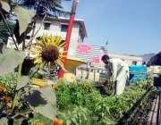 مظفر آباد : زیر نظر تصویر میں سماجی تنظیم کے رضاکار المصطفیٰ چوک نیلم ..
