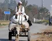راولپنڈی: ایک معمر شخص گدھا ریڑھی پر خشک گھاس لادے اپنے منزل کی طرف ..