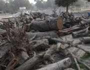 لاہور: شہر میں جاری ترقیات منصوبوں کے باعث مختلف مقامات سے کاٹے گئے ..