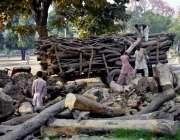 لاہور: ناصر باغ میں پی اچ اے کے ملازم پرانے درخت کاٹ کر ٹرالی میں لوڈ ..