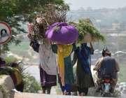 اسلام آباد: خانہ بدوش خواتین لکڑیاں جلانے کے لیے سر پر اٹھائے اپنی منزل ..