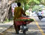 اسلام آباد: ایکپھل فروش موٹر سائیکل پر سٹرابری رکھے فروخت کے لیے جا ..
