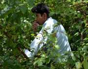 اسلام آباد: ایک لڑکا درخت سے شہتوت اتار کر کھا رہا ہے۔