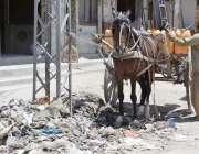 کوئٹہ: سریاب روڈ پر ایک شخص تانگے پر پانی کے گیلن لوڈ کررہا ہے۔