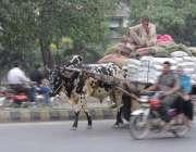 لاہور: ایک محنت کش بیل گاڑی پربھاری سامان لادھے جا رہا ہے۔