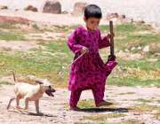 راولپنڈی: ایک ننھی افغان بچی اپنے گھر کے باہر جانور کے بچے کو رسی پہنائے ..
