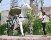 """لاہور: """"بچپن"""" ایک بچہ مقامی پارک میں گھوڑے کے ماڈل کو درخت کے پتے کھلانے .."""