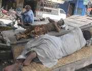 راولپنڈی: مزدور درخت کے سائے تلے اپنے ریڑھو ں پر سو رہے ہیں۔