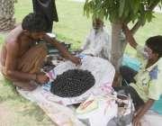 لاہور: ایک محنت کش جامن فروخت کر رہا ہے۔