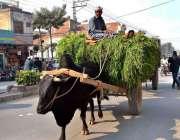 ملتان: ایک شخص بیل گاڑی پر چارہ لادھے جا رہا ہے۔