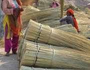 ملتان: محنت کش خواتین جھاڑو بنانے میں مصروف ہیں۔