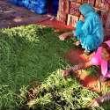 حیدر آباد: سبزی منڈی میں محنت کش خواتین سبز مرچین چن رہی ہیں۔
