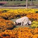 لاہور: جیلانی پارک میں ایک شخص نماز ادا کر رہا ہے۔