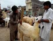 راولپنڈی: بیوپاری عید قربان کے لیے لائے گئے جانوروں کی صفائی میں مصروف ..