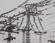 لاہور: کبوتروں کا جھنڈ تاروں پر بیٹھا ہے۔