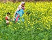 لاہور: ایک بزرگ خاتون کھیتوں میں سے گزر رہی ہے۔