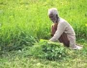 لاہور: ایک معمر کسان بھینسوں کا چارہ کاٹنے میں مصروف ہے۔