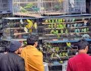 ملتان: شہری فینسی برڈ دیکھنے میں مصروف ہیں۔