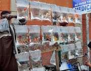 ملتان: ایک شخص فروخت کے لیے فینسی مچھلیاں فروخت کر رہا ہے۔