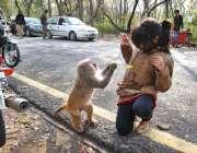 اسلام آباد: ایک بچی سے بندر چھلی چھین رہا ہے۔