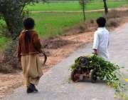 سرگودھا: دو بچے چھوٹی سائیکل پر چارہ رکھے لیجا رہے ہیں۔