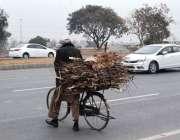 اسلام آباد: ایک معمر شخص گھر کا چولہا جلانے کے لیے خشک لکڑیاں سائیکل ..