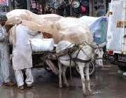 سرگودھا: ایک گدھا ریڑھی والا بارش سے بچاؤ کے لیے سامان پلاسٹک کی شیٹ ..