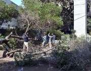 حیدر آباد: مزدور سڑک پر گرے ہوئے درخت کو ہٹانے رہے ہیں۔
