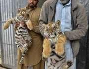 راولپنڈی: ایوب نیشنل پارک کے ملازمین شیرنی کے بچے دکھ رہے ہیں۔