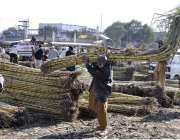 اسلام آباد: ایک معمر محنت کش فروٹ منڈی میں ٹرالے سے گنے اتار رہا ہے۔