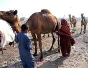 حیدر آباد: ایک خانہ بدوش خاتون اونٹنی کا دودھ دو رہی ہے۔