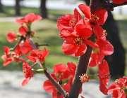اسلام آباد: وفاقی دارالحکومت میں بہار کے موسم میں کھلے پھول دلکش منظر ..