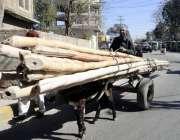 راولپنڈی: مزدور گدھا گاڑی پر بانس لادھے شمس آباد روڈ سے گز رہا ہے۔