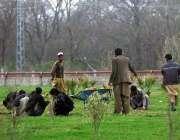 اسلام آباد: سی ڈی اے کے اہلکار روڈ کنارے گرین بیلٹ پر لگے پودوں کی دیکھ ..